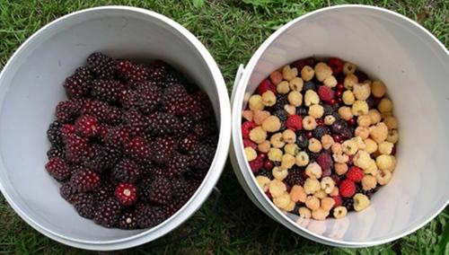 Buckets of goodness