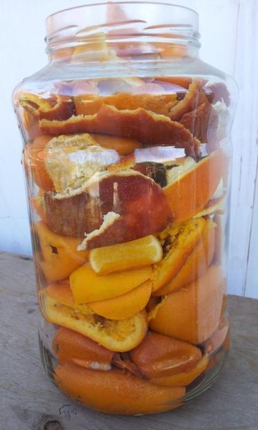 Citrus season.jpg